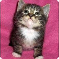 Adopt A Pet :: Pansy - Richmond, VA