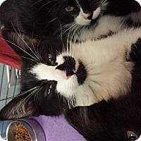 Adopt A Pet :: Erika Eleniak (AKA MOO MOO) - Richboro, PA