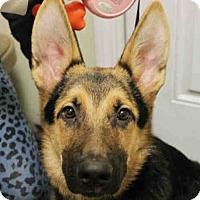 Adopt A Pet :: SHIRLEY - Tully, NY