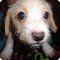Adopt A Pet :: Rugby - San Antonio, TX