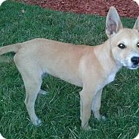 Adopt A Pet :: Jessica#1M - Orlando, FL