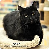 Adopt A Pet :: Saki - Ortonville, MI