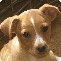 Adopt A Pet :: Candy - Plainfield, CT