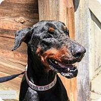 Adopt A Pet :: Beasley - Houston, TX