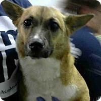 Adopt A Pet :: LARA - Atlanta, GA