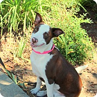 Adopt A Pet :: Millie - Yuba City, CA