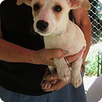 Adopt A Pet :: PETUNIA - Williston Park, NY