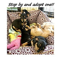 Adopt A Pet :: Butterscotch - Tyler, TX