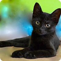 Adopt A Pet :: Minka - Long Beach, NY