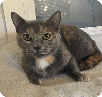 Calico Cat for adoption in Mount Pleasant, South Carolina - Heidi