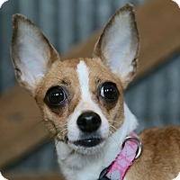 Adopt A Pet :: Gertie - St. Charles, MO