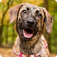 Adopt A Pet :: Malaya - Cincinnati, OH
