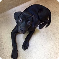 Adopt A Pet :: Grace - Austin, TX