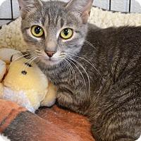 Adopt A Pet :: Princess - Newberg, OR