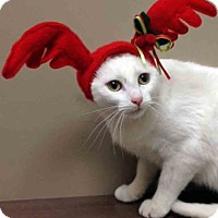 Adopt A Pet :: Iris - Shorewood, IL