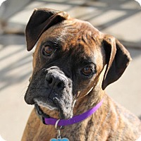 Adopt A Pet :: Kenai - Denver, CO