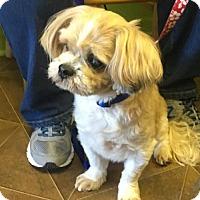 Adopt A Pet :: Joe - Gilberts, IL