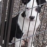 Adopt A Pet :: Zao - Mesa, AZ