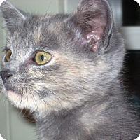 Adopt A Pet :: Holly - Big Canoe, GA