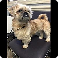 Adopt A Pet :: Ashton - LEXINGTON, KY