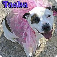 Adopt A Pet :: Tasha - Mechanicsburg, PA