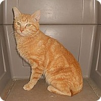 Adopt A Pet :: Steve - Simpsonville, SC