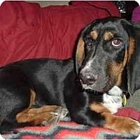 Adopt A Pet :: Fritz - Phoenix, AZ