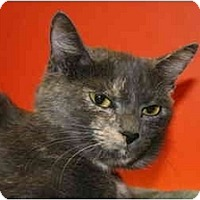 Adopt A Pet :: ALICE - SILVER SPRING, MD