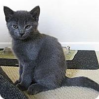Adopt A Pet :: Doakes - Irvine, CA