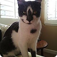 Adopt A Pet :: Cookie - Lafayette, CA