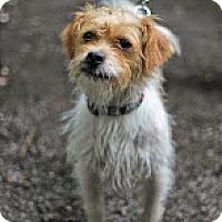Adopt A Pet :: Baxter - Tinton Falls, NJ