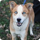 Adopt A Pet :: LANDON