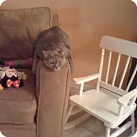 Adopt A Pet :: Ella Bella - Columbus, OH