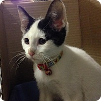 Adopt A Pet :: Sweet Pea - East Brunswick, NJ