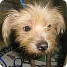 Adopt A Pet :: Harriet