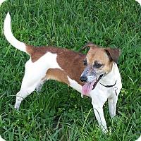Adopt A Pet :: ELLIE - Terra Ceia, FL