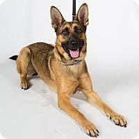 Adopt A Pet :: Stranger - San Francisco, CA