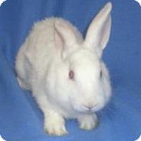 Adopt A Pet :: Olaf - Woburn, MA
