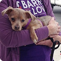 Adopt A Pet :: **Buddy** - Fullerton, CA