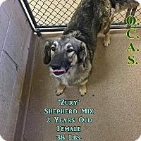 Adopt A Pet :: 2-1 Zury - Triadelphia, WV