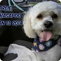 Adopt A Pet :: Charlie - Huddleston, VA