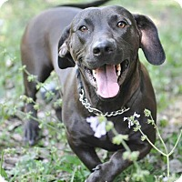 Adopt A Pet :: Taffy - Ormond Beach, FL