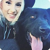 Adopt A Pet :: URGENT - Wednesday! - Los Angeles, CA