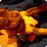 Adopt A Pet :: Turner - Foristell, MO