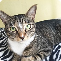 Adopt A Pet :: Harriet - Boca Raton, FL