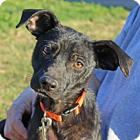 Adopt A Pet :: Levi - Foster Needed - kennebunkport, ME
