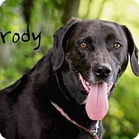 Adopt A Pet :: Brody - Joliet, IL