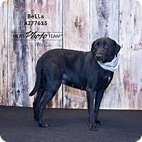 Adopt A Pet :: BELLA - Conroe, TX