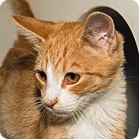 Adopt A Pet :: Morris - Prescott, AZ