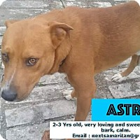 Adopt A Pet :: Astro - Houston, TX